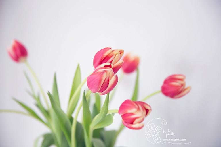 Tulpen Hinke Pinke